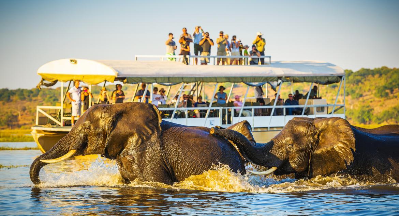 banner of Wildlife Tourism Has Great Destinations Around the World